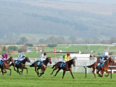 Racing shot from Cheltenham Racecourse