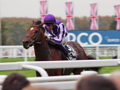 Experience the thrill of QIPCO British Champions Day