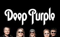 Deep Purple Hospitality Hospitality