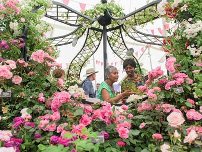 Hampton Court Palace Flower Show Displays