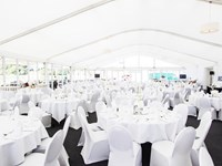 Chester polo Marquee