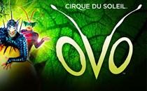 Cirque Du Soleil Hospitality Hospitality