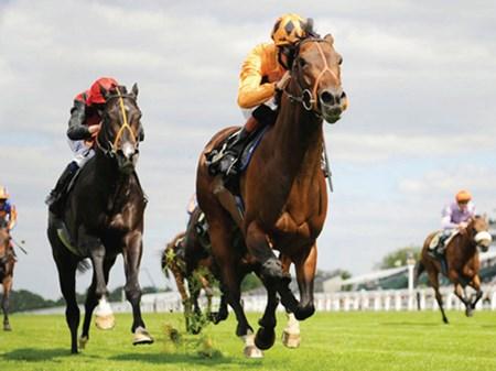 NEW Ascot Horses